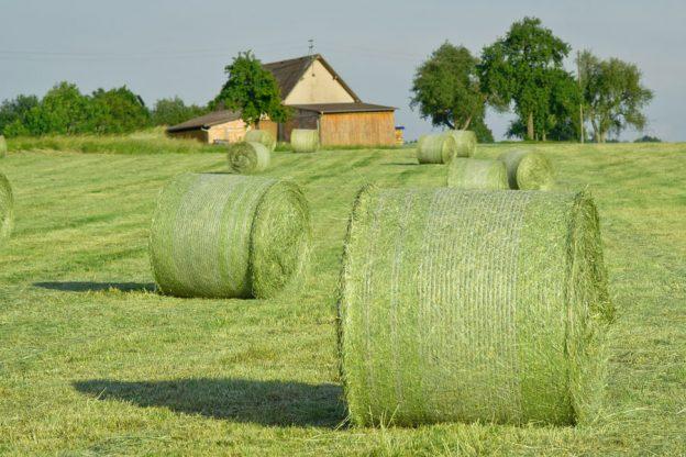 hay-bales-502949_1920